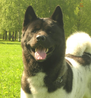 Питомники собак каталог